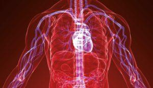 Image showing vascular system